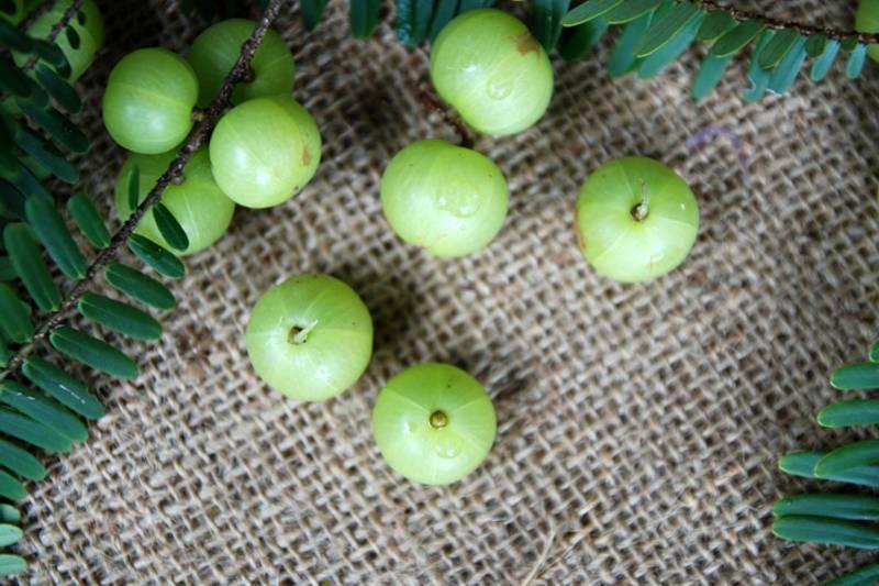 Organic India Amalaki 90 kapsler